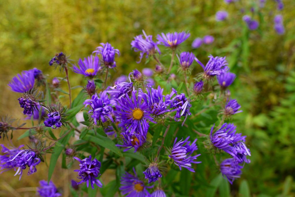 青葉公園の花など_f0138096_1643583.jpg