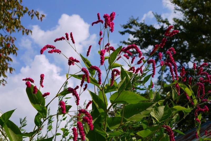 青葉公園の花など_f0138096_164459100.jpg