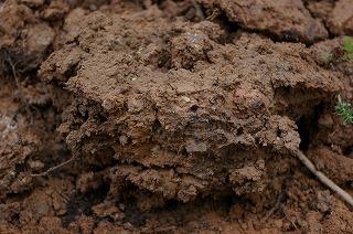 壁土の採取_f0060500_16205282.jpg