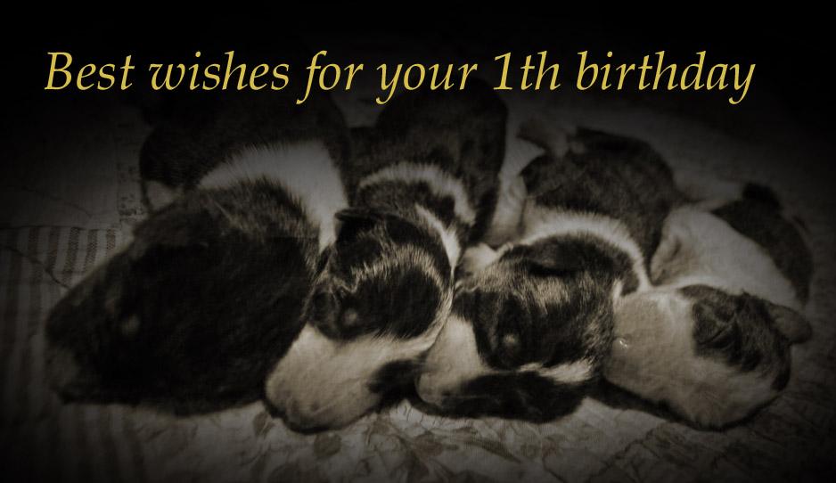 Happy 1th Birthday!_f0116805_23174952.jpg