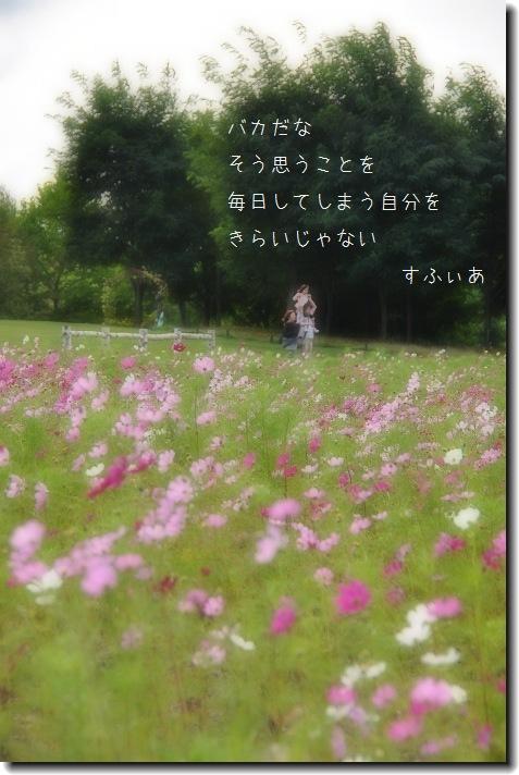 b0152416_011291.jpg