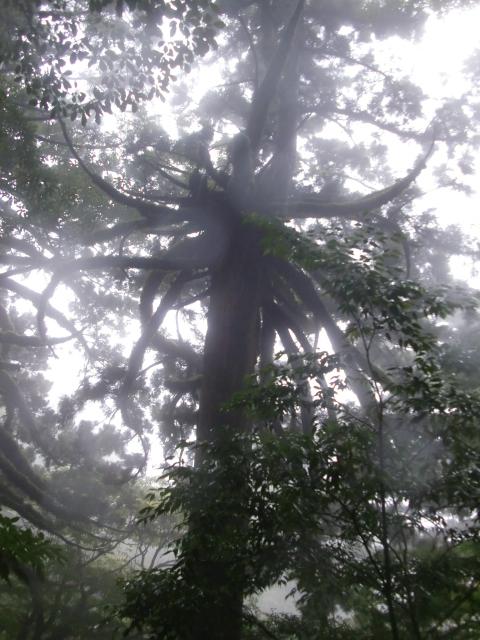 縄文杉迄の有名どころ・・・2_c0110416_15101912.jpg