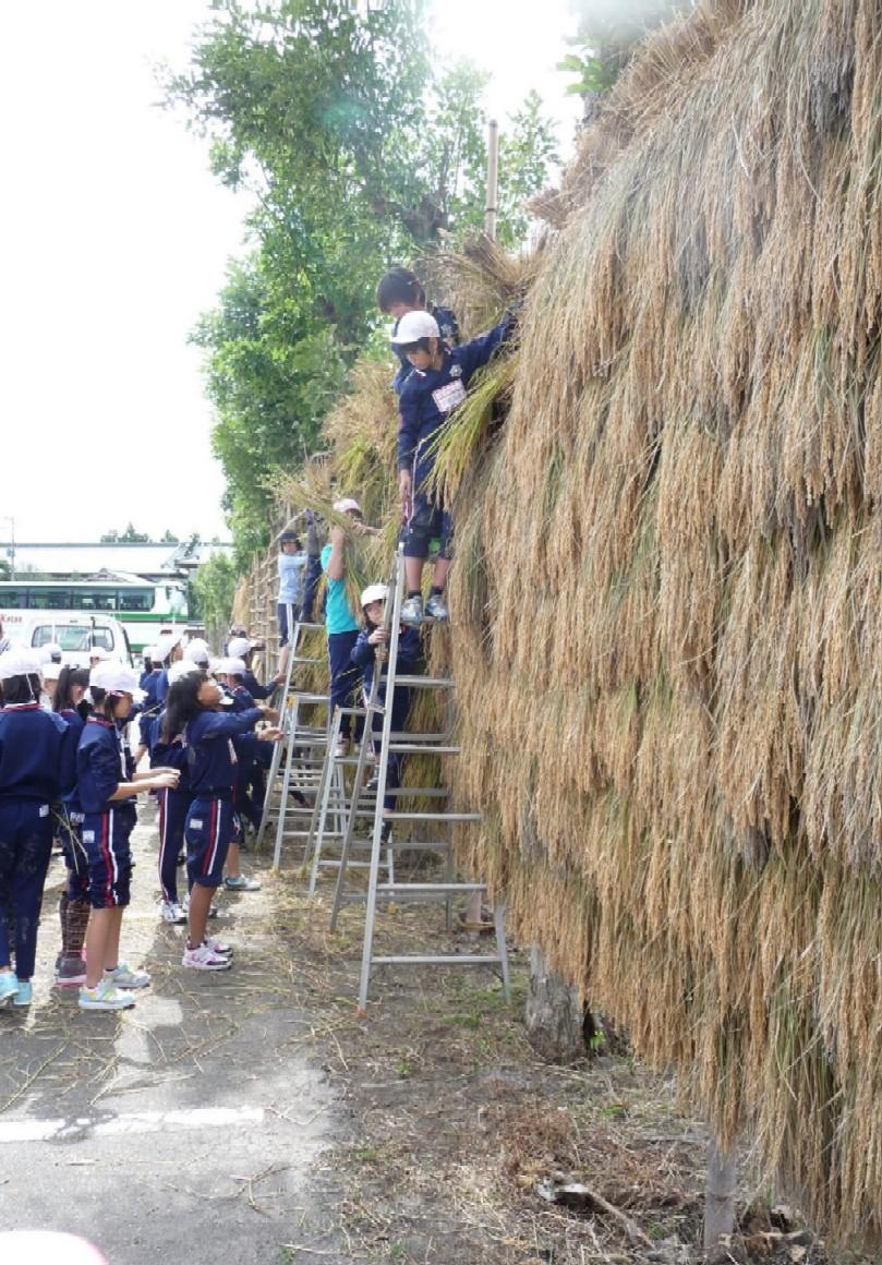 収穫の秋☆_e0135219_14522857.jpg