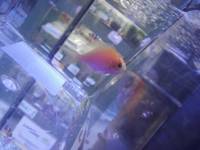海水魚・サンゴ・水草・淡水魚_f0189122_1324972.jpg