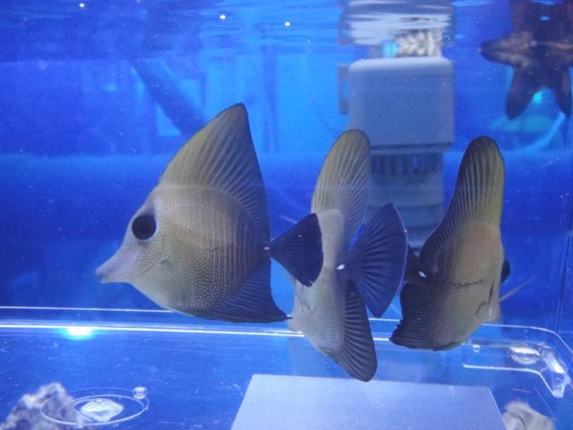 海水魚・サンゴ・水草・淡水魚_f0189122_1351583.jpg