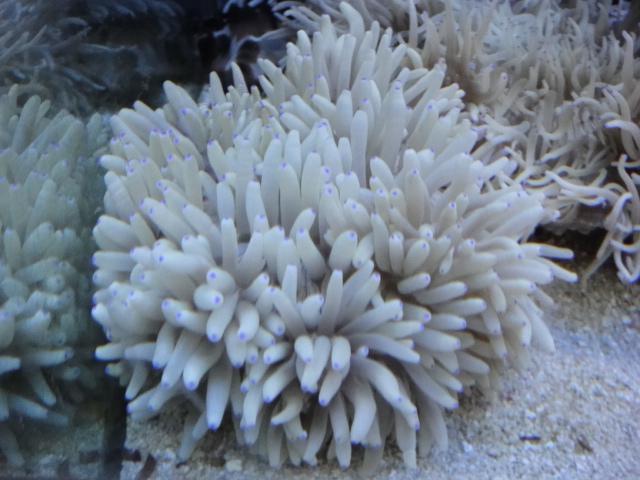 海水魚・サンゴ・水草・淡水魚_f0189122_1381474.jpg