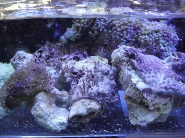 海水魚・サンゴ・水草・淡水魚_f0189122_1392334.jpg