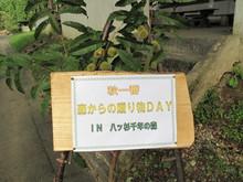 秋一番・森からの贈り物DAY_e0061225_9253243.jpg