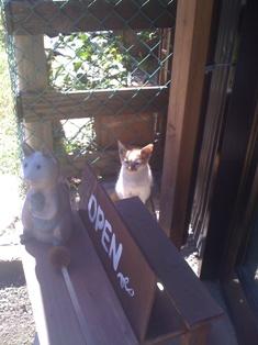 招き猫?_c0209240_0335917.jpg