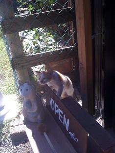 招き猫?_c0209240_03963.jpg