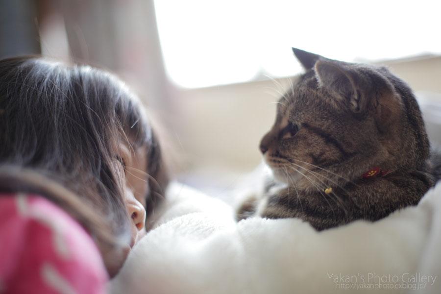 休日の昼さがり、犬猿(猫娘?)の仲の二人_b0157849_035169.jpg