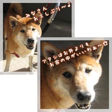 """""""55!伝説""""_c0049950_10315650.jpg"""