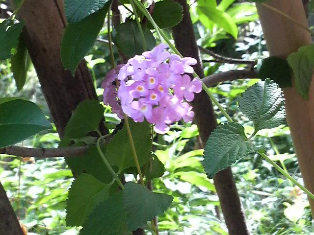 そば紀行の秋の庭_c0185356_16141821.jpg