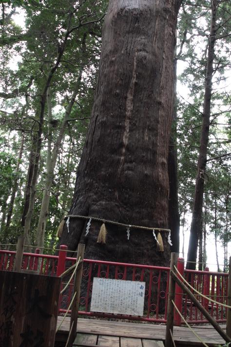 東日本一の杉の木_a0157159_2347567.jpg