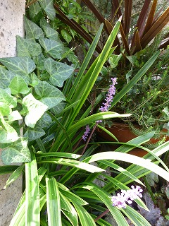 autumn flower 庭のお花を♪_a0165160_5245179.jpg
