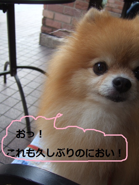 b0182968_10311976.jpg