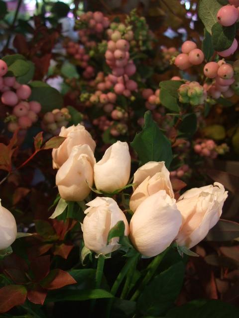 オークリーフ(秋バラの季節へ・・)_f0049672_153833.jpg
