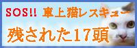 【みのり】 ベッドでじゃれじゃれ_a0066779_1891886.jpg