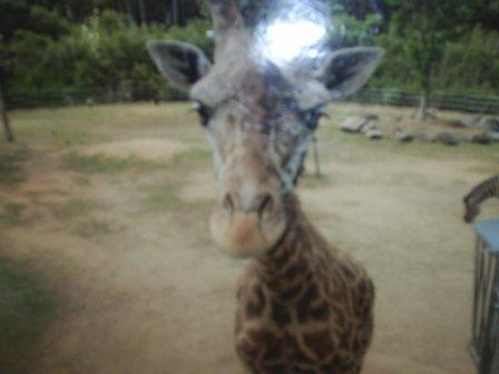 動物園_b0201285_2043136.jpg