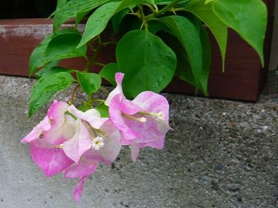 季節??の花★_f0223914_20412860.jpg