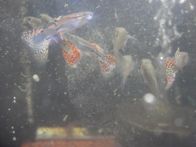 熱帯魚・水草_f0189122_1362755.jpg
