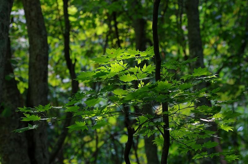 PENTAX K5撮りおろし4 森のささやき_f0050534_13325649.jpg