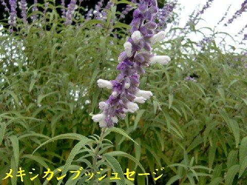 b0012636_8194381.jpg