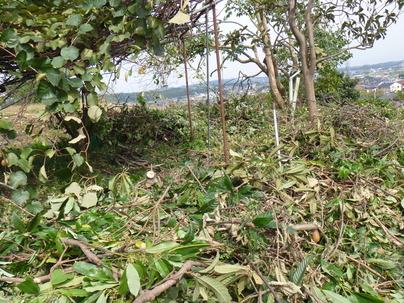 伐採現場4日目です_c0186441_18432218.jpg