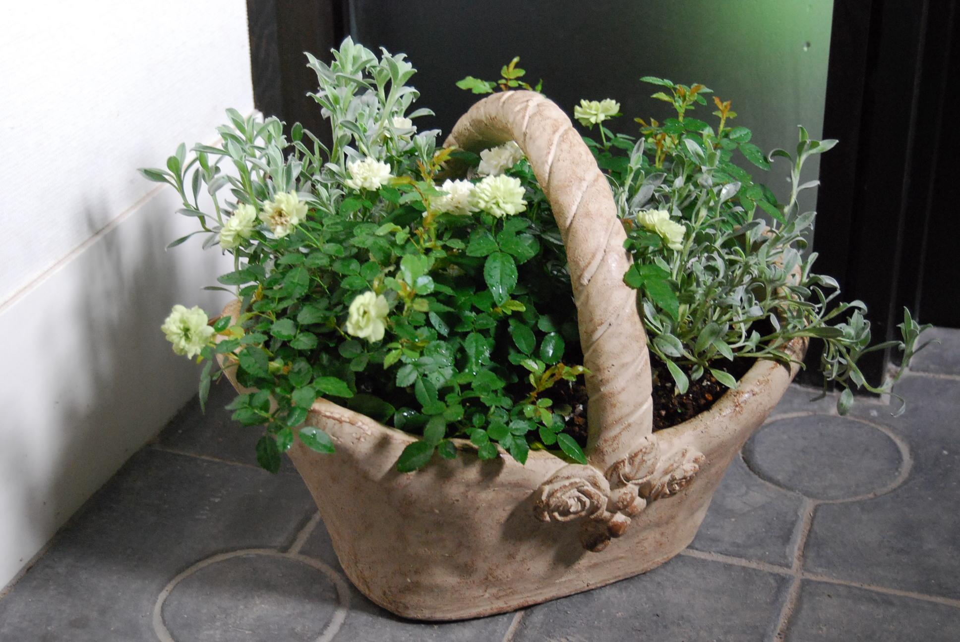 ミニバラの鉢植え_e0142956_925428.jpg