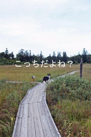 f0132070_9172187.jpg