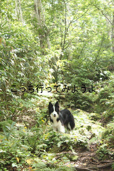 f0132070_919057.jpg