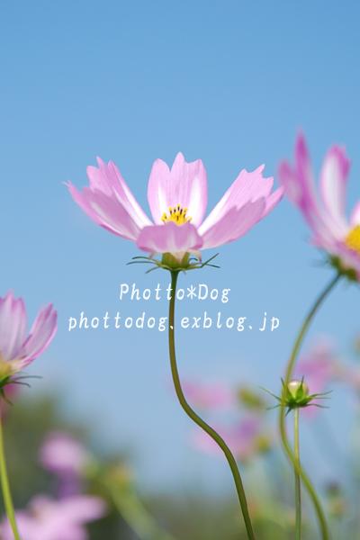 f0206270_03359.jpg