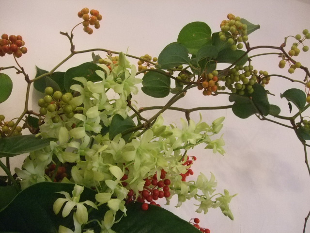 オークリーフ(ミストリーベロ開店の花)_f0049672_16543616.jpg