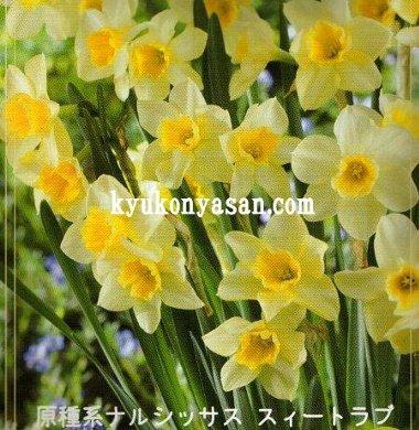 f0054197_8275518.jpg