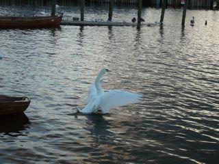 白鳥にみちびかれて_c0203401_2258447.jpg