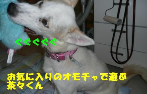 f0121712_1551745.jpg