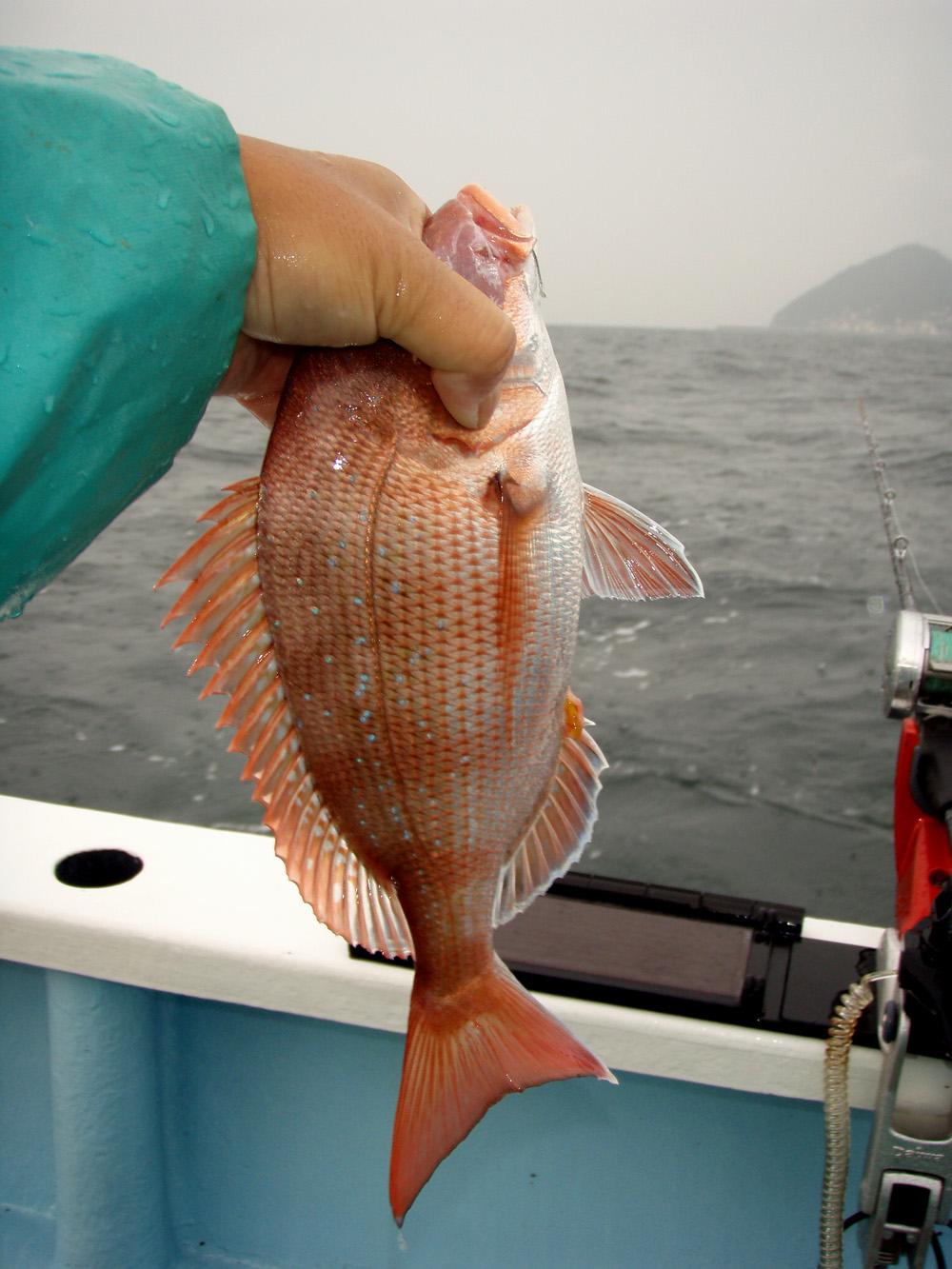 2010年9月30日(木) 知多半島 大井港より釣行_d0171823_21405065.jpg