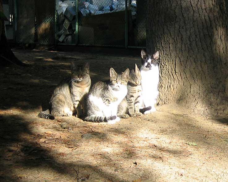 10月の猫・・・・・・PUSH-PULL_d0138130_1061389.jpg