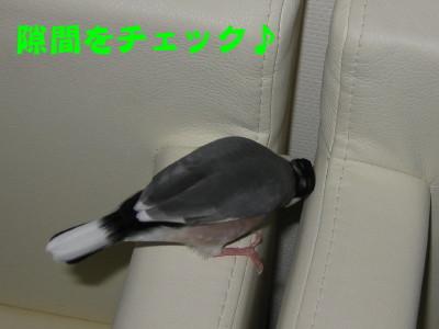 b0158061_20354175.jpg