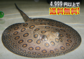 b0052564_10461349.jpg