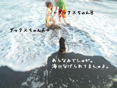 f0168174_93979.jpg