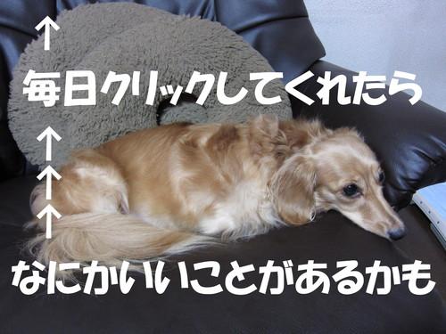b0200291_19145585.jpg