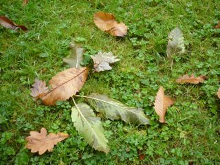 ワーズワースの庭     ~RYDAL MOUNT&GARDENS~_c0203401_0124854.jpg