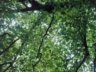 ワーズワースの庭     ~RYDAL MOUNT&GARDENS~_c0203401_012585.jpg