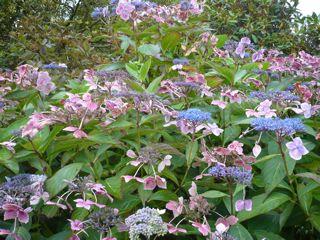 ワーズワースの庭     ~RYDAL MOUNT&GARDENS~_c0203401_01366.jpg