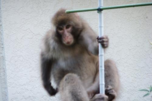 f0101201_1552585.jpg