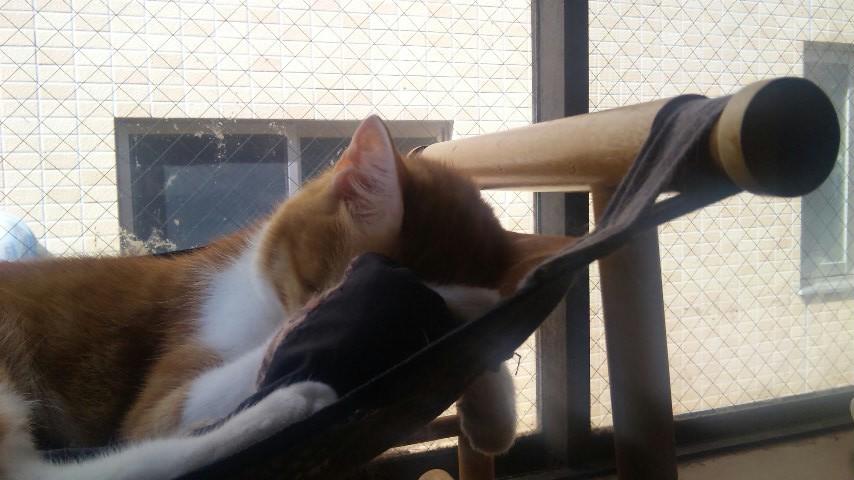 罪な猫。_b0019333_1381837.jpg