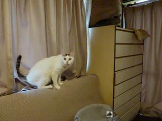猫のお友だち マカロニくん チャイロくん チビタくん編。_a0143140_2126211.jpg