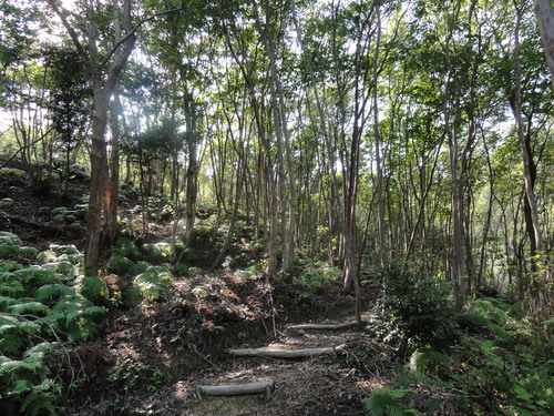 孝子の森の秋 Ⅰ_c0108460_22525531.jpg