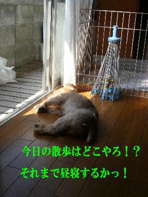 d0013645_1505222.jpg